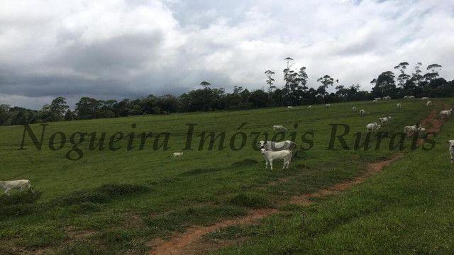 Fazenda pra pecuária, 180 alqueires (Nogueira Imóveis Rurais) - Foto 13