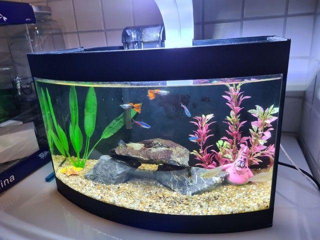 Vendo aquário 19 litros com filtro e iluminação
