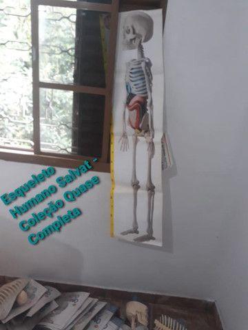 Esqueleto Humano - Coleção até o Fascículo 41