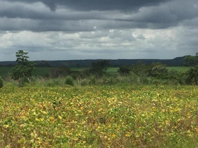 FAZENDA EM GOIATINS, Área Plantada em SOJA 2.200 hectares