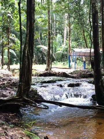 Fazenda em Presidente Figueiredo próximo cachoeira Urubui - Foto 17