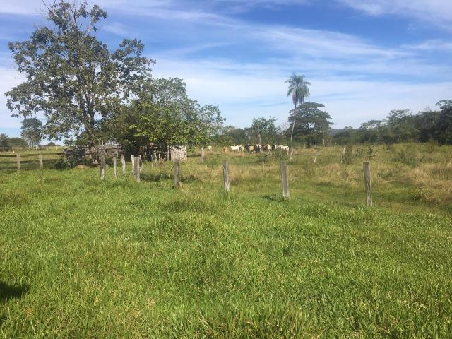 Sítio na Comunidade Carrijo à 60 Km do Trevo do Lagarto - Foto 6