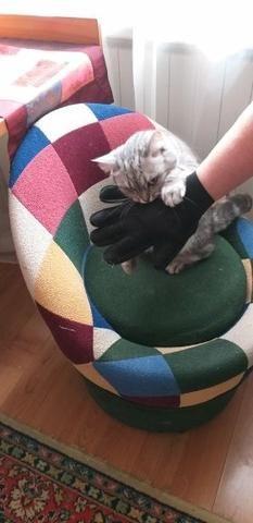 Luva Escova Nano Magnetica tira Pelos dos Pets Cães e Gatos - Foto 5