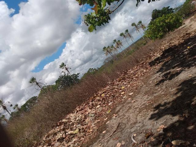 Terreno de 58 hactares com casa - Foto 3