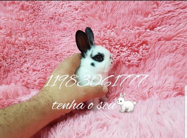 Mini coelhinho anão  fofura (alegra sua família) - Foto 2