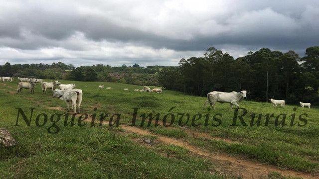 Fazenda pra pecuária, 180 alqueires (Nogueira Imóveis Rurais) - Foto 3