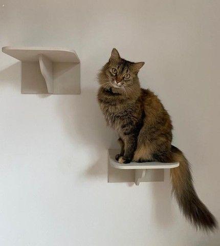 Casa brinquedo de gato