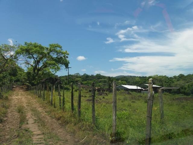 Fazenda no Jardim Grapiúna