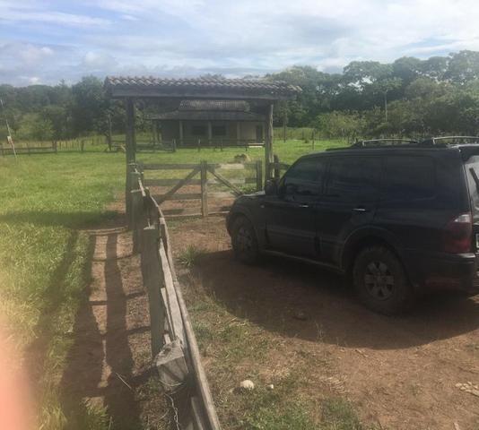 Sítio na Comunidade Carrijo à 60 Km do Trevo do Lagarto - Foto 15