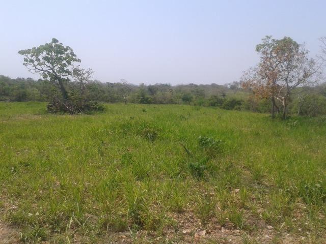 Troco Fazenda,195 hectares,lazer,turismo,pecuária,Cuiabá-MT - Foto 2