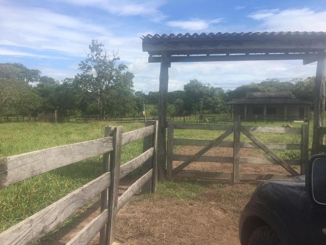 Sítio na Comunidade Carrijo à 60 Km do Trevo do Lagarto - Foto 2