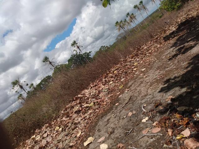 Terreno de 58 hactares com casa - Foto 4