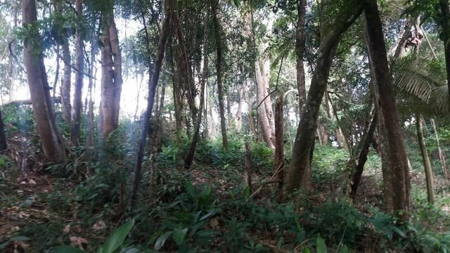 Terreno 1600M - Embu Guaçu - Foto 12