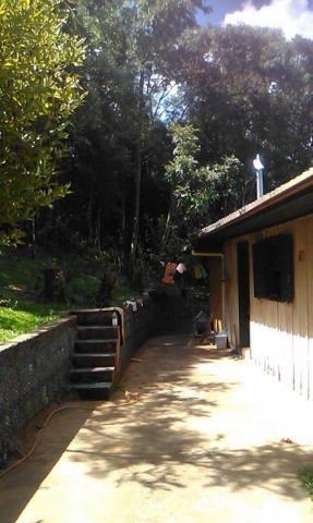 Sítio com 2 dormitórios à venda, 200000 m² por r$ 350.000,00 - santa terezinha - canela/rs - Foto 7