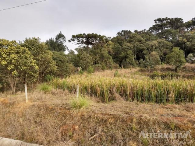 Ótimo Terreno Rural 32.000m2, Vila Volta Grande - Rio Negrinho SC. Oportunidade - Foto 15