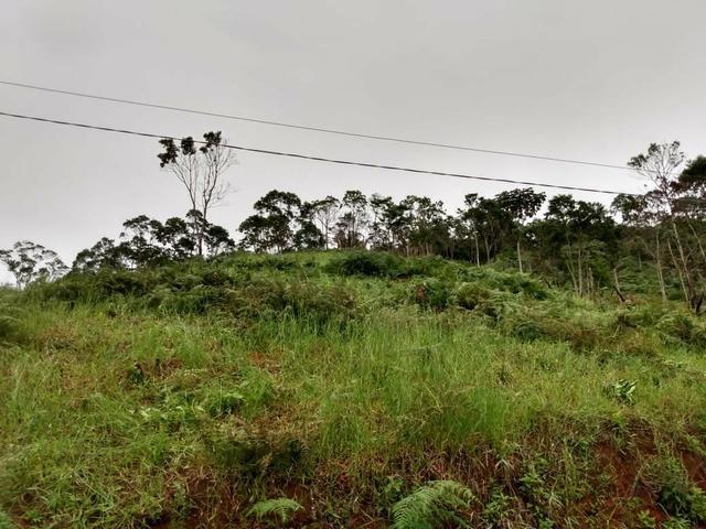 Terreno em Marechal Floriano - Foto 2
