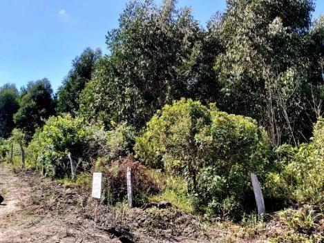 Área Rural - Chácara - Rio Preto - Rio Negrinho - Foto 4