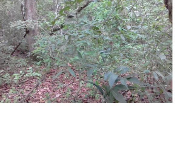 9.0 Hectares, Chapada dos Guimarães, 01 riacho e um rio, um paraíso, aceito troca - Foto 5