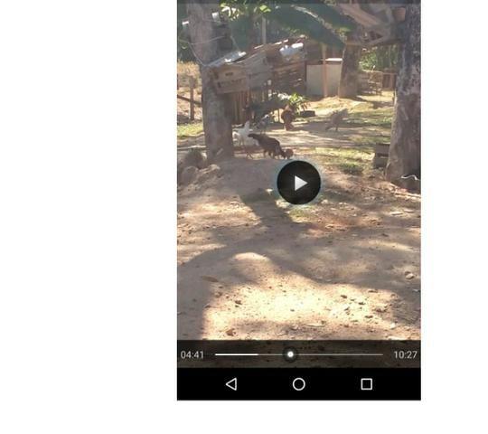 Ocasião,14,95 hectares,porteira fechada,peixes,Novilhas,Santo Antônio-MT - Foto 3