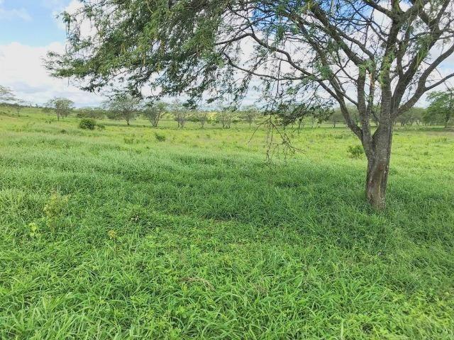 Fazenda à Venda na Bahia - Fazenda de Pecuária c/ 326 Hectares em Várzea do Poço - Bahia - Foto 17