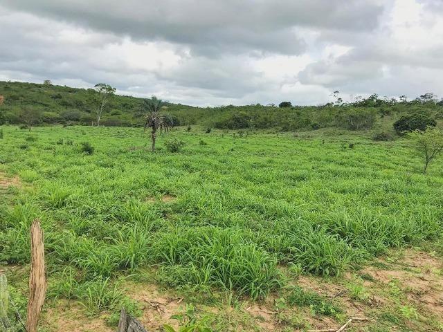 Fazenda à Venda na Bahia - Fazenda de Pecuária c/ 326 Hectares em Várzea do Poço - Bahia - Foto 16