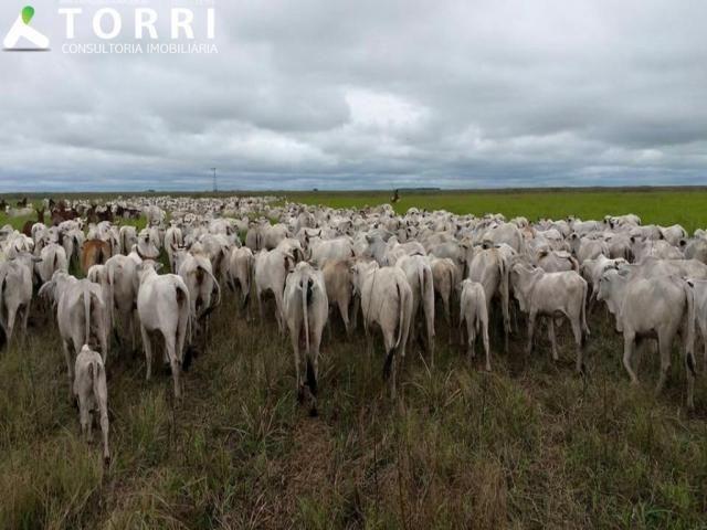 Fazenda a venda em Corumbá - Foto 13