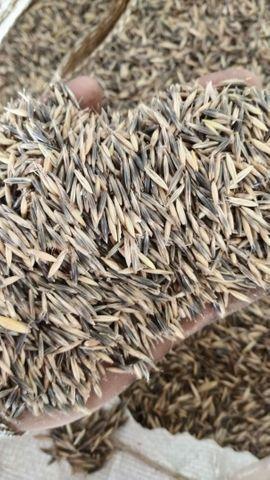 Vende-se semente de aveia, tonelada