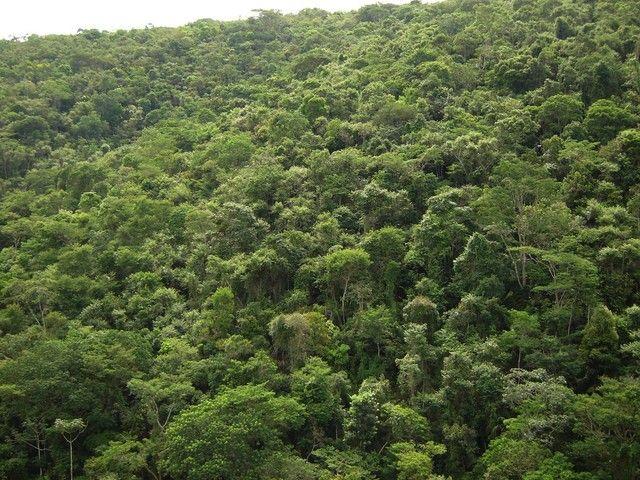 Mata 17.275 mil hectares para manejo de madeira