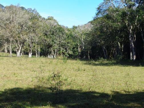 Área c/ 2 hec. Estrada Municipal de Canudos-Arroio Grande-10003 - Foto 8