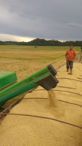 101 hectares, com 90 aberto Plantando 86 hectares (Negocio de Ocasião)