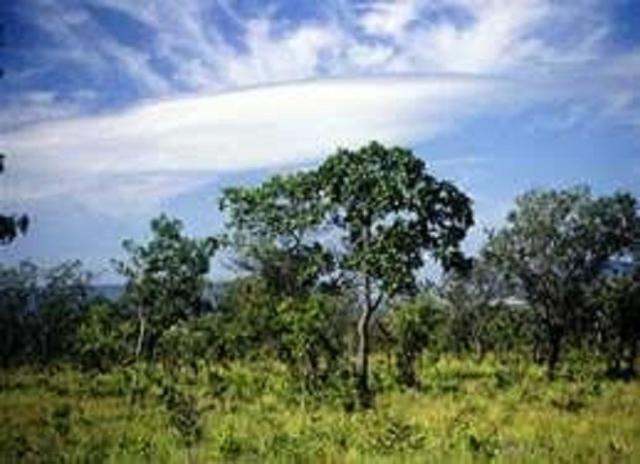 Fazenda Cristalândia/Lagoa da Confusão, 120 alqueires (587 hectares) - R$ 360.000,00