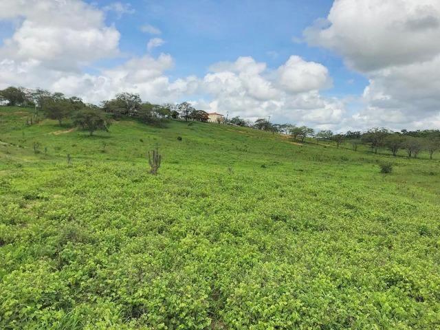 Fazenda à Venda na Bahia - Fazenda de Pecuária c/ 326 Hectares em Várzea do Poço - Bahia - Foto 11