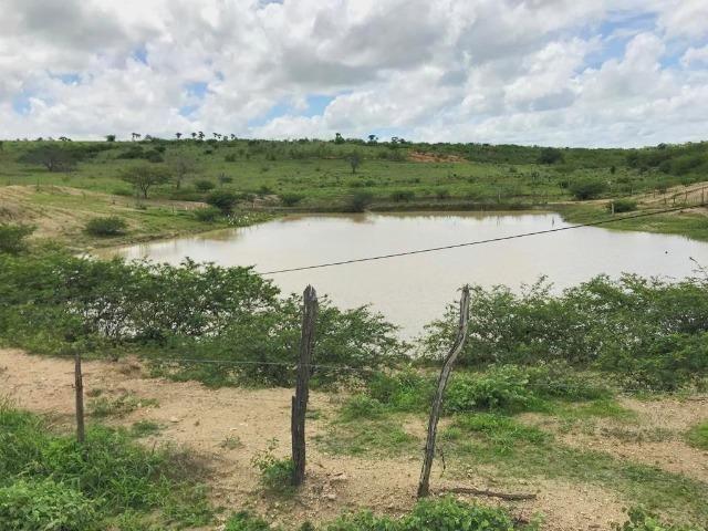 Fazenda à Venda na Bahia - Fazenda de Pecuária c/ 326 Hectares em Várzea do Poço - Bahia - Foto 7