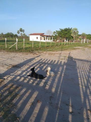Pequeno sítio em Itaitinga! - Foto 2