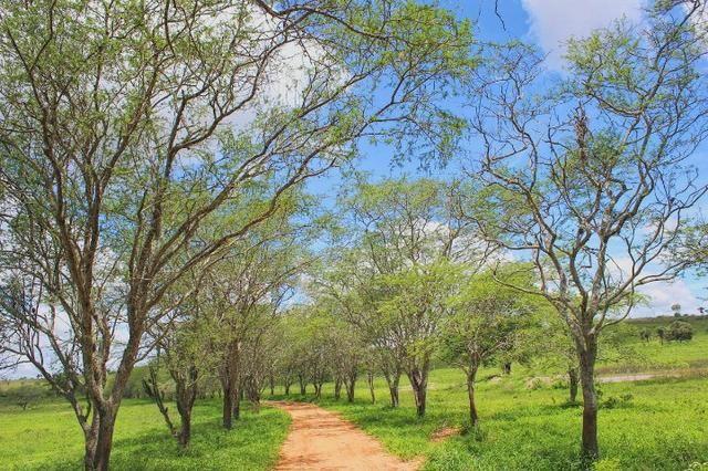 Fazenda à Venda na Bahia - Fazenda de Pecuária c/ 326 Hectares em Várzea do Poço - Bahia - Foto 19