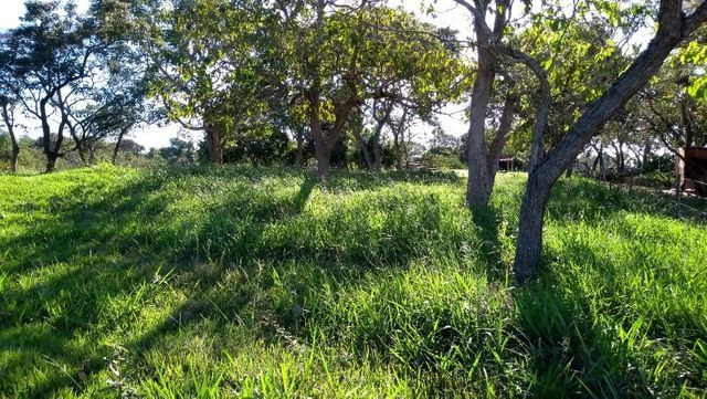Sítio 14,6 ha e água nascente - Terenos, MS, Brasil - Foto 8