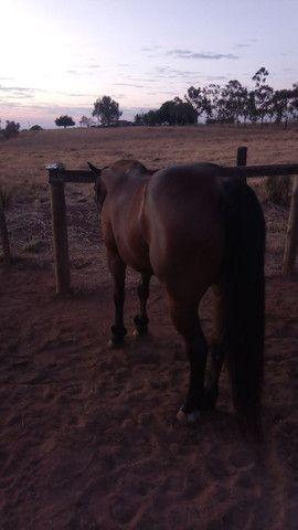 Cavalo De Pé - Foto 3
