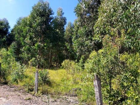 Área Rural - Chácara - Rio Preto - Rio Negrinho - Foto 6