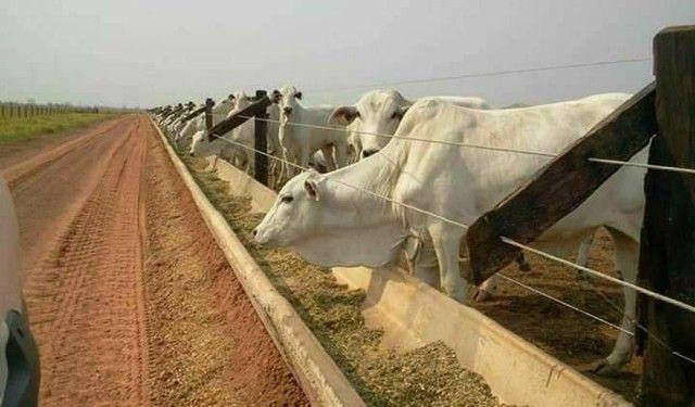 Reservatório / bebedouros e Cochos para gado - Foto 3