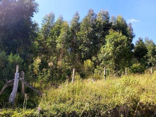 Área Rural - Chácara - Rio Preto - Rio Negrinho - Foto 5