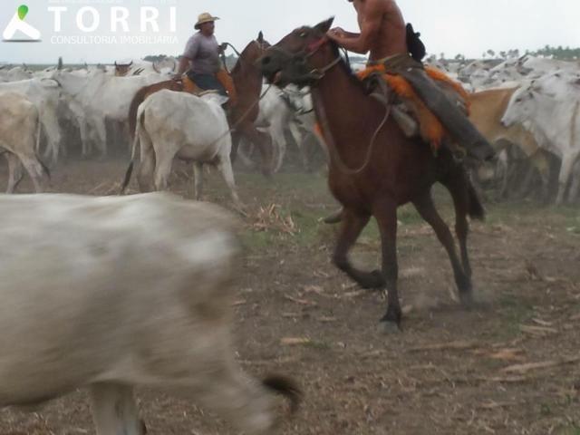 Fazenda a venda em Corumbá - Foto 10