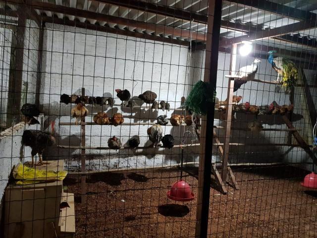 Chácara em Parnamirim, bairro boa esperança - Foto 10
