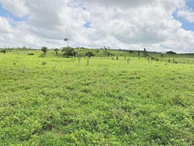 Fazenda à Venda na Bahia - Fazenda de Pecuária c/ 326 Hectares em Várzea do Poço - Bahia - Foto 12