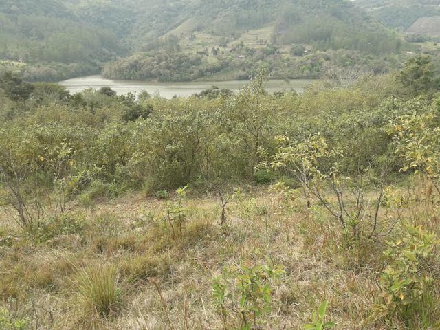 14,9 hectares de terra na beira do rio Uruguai - Foto 2