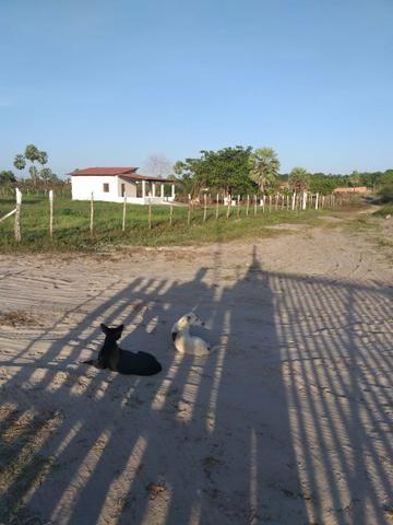 Pequeno sítio em Itaitinga! - Foto 4