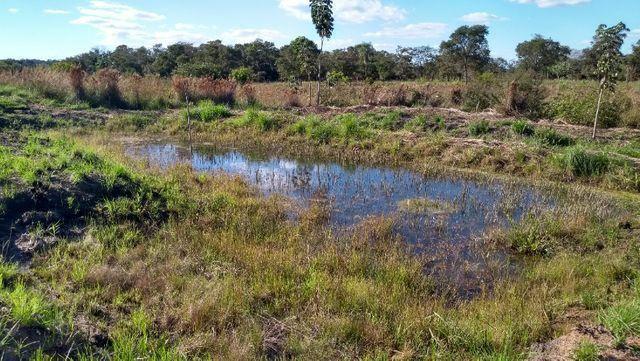 Sítio 14,6 ha e água nascente - Terenos, MS, Brasil - Foto 14