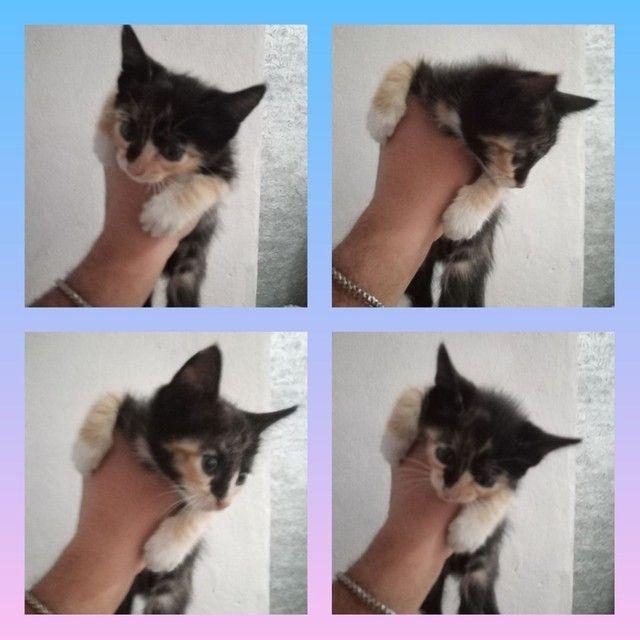 Doação de Filhotes de Gato - Foto 2