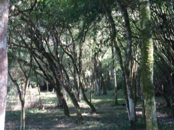 Área c/ 2 hec. Estrada Municipal de Canudos-Arroio Grande-10003 - Foto 9