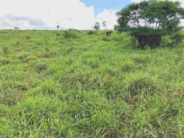 Fazenda à Venda na Bahia - Fazenda de Pecuária c/ 326 Hectares em Várzea do Poço - Bahia - Foto 14