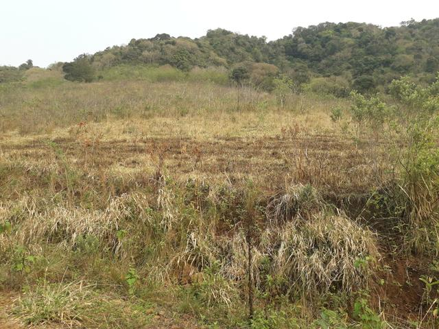14,9 hectares de terra na beira do rio Uruguai - Foto 6